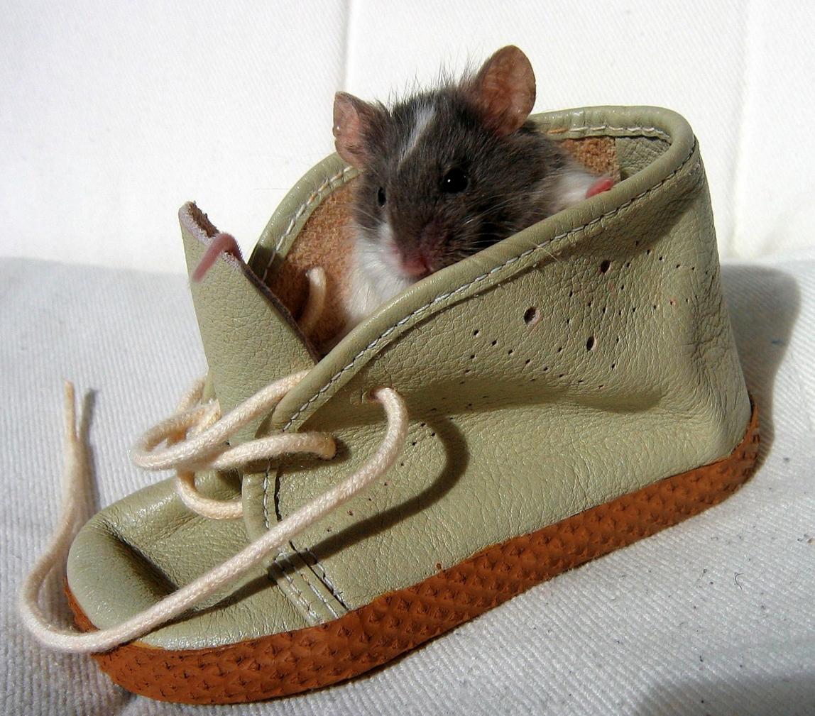 Photo of Was das Mäuseauge dem Mäusegehirn erzählt