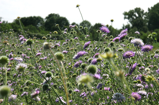 Photo of Neue Wiesen sollten aus Saatgut der gleichen Region entstehen